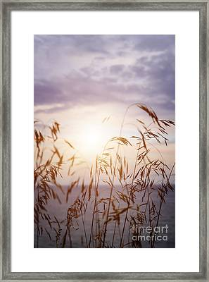 Tall Grass At Sunset Framed Print by Elena Elisseeva