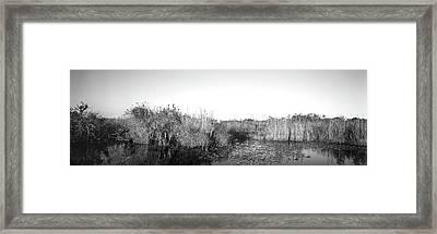 Tall Grass At The Lakeside, Anhinga Framed Print
