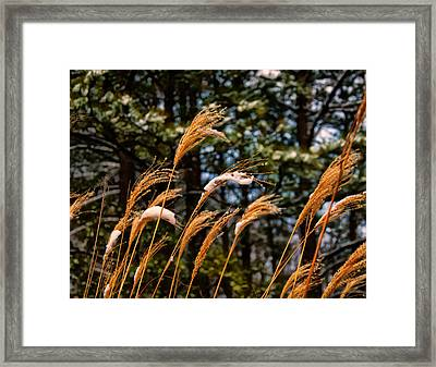 Tall Grass In Winter Framed Print