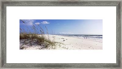Tall Grass On The Beach, Perdido Key Framed Print