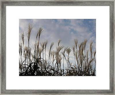 Tall Grasses And Blue Skies Framed Print