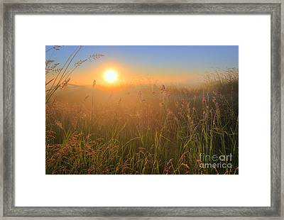 Tall Grasses Framed Print
