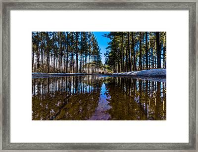 Tall Pines Framed Print