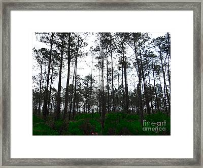 Tall Tree Forest Framed Print by Ecinja Art Works