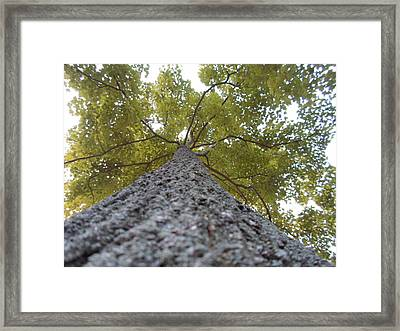 Tall Tree Framed Print by Jenna Mengersen