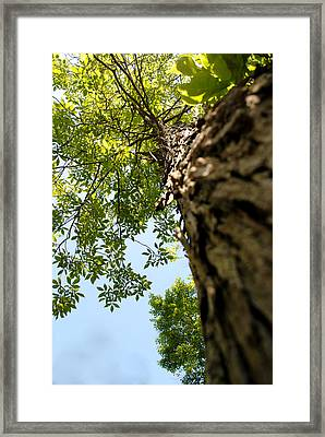 Tall Tree Framed Print by Stephanie Grooms