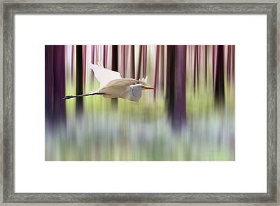 Framed Print featuring the photograph Tall Trees by Valerie Anne Kelly