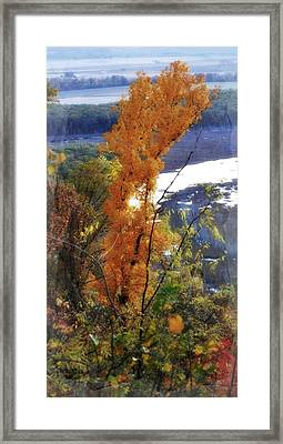 Tall Yellow Tree Framed Print by Marty Koch