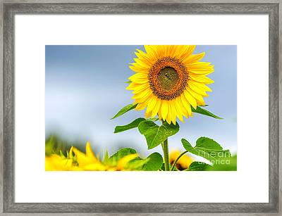 Framed Print featuring the photograph Taller Than Most by Mike Ste Marie