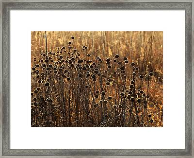 Tallgrass Morning Framed Print by Christopher McKenzie