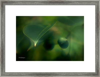 Framed Print featuring the photograph Tallow Tree by Travis Burgess