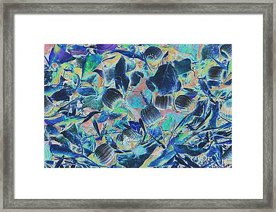 Talo Tree Leaves And Nuts Inversed Color Framed Print