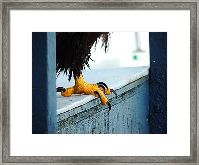 Talon Power Framed Print by Karen Horn