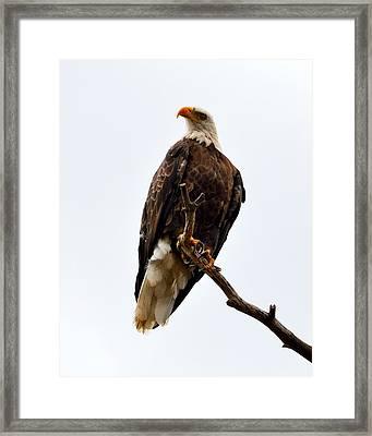 Talons Framed Print