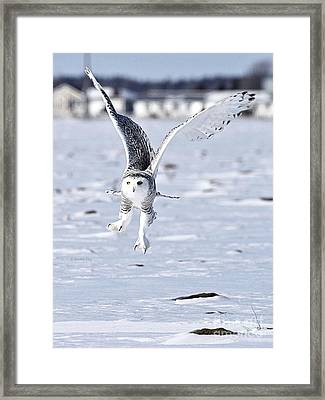 Talonted Framed Print by Heather King