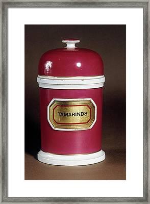 Tamarind Jar Framed Print by Science Photo Library
