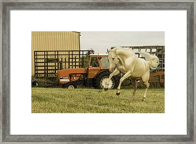 Tantrum Framed Print by Jason Smith