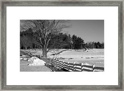 Tamworth Maple In Winter Framed Print