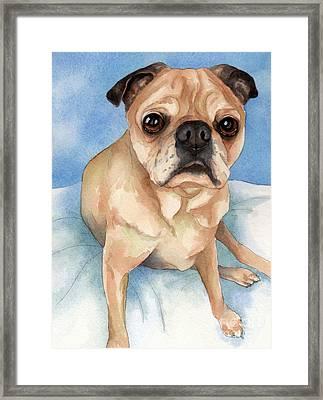 Tan And Black Pug Dog Framed Print by Cherilynn Wood