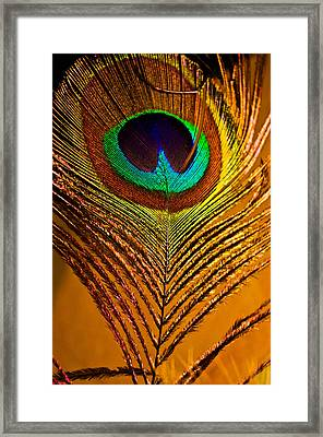Tan Feather Framed Print