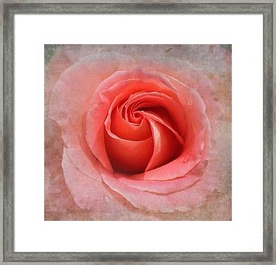 Tangerine Delight Framed Print by Angie Vogel