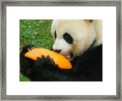 Tangerine Delight Framed Print