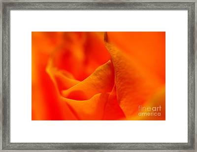 Tangerine Dreams Framed Print by Pamela Gail Torres