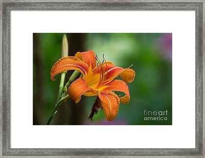 Tangerine For A Day Framed Print