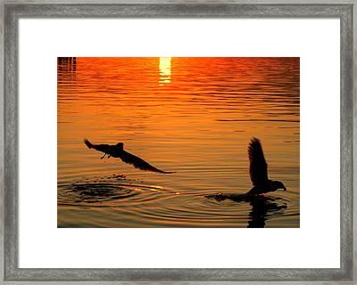 Tangerine Moonlight Framed Print by Karen Wiles
