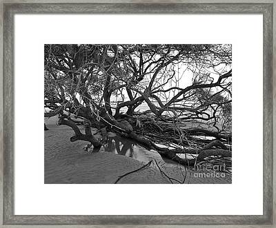 Tangle Framed Print by M West