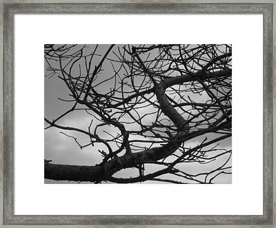 Tangled By The Wind Framed Print