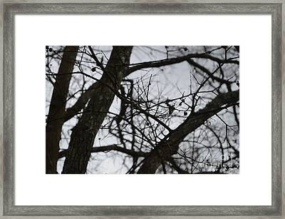 Tangled Framed Print by Catherine Peterson