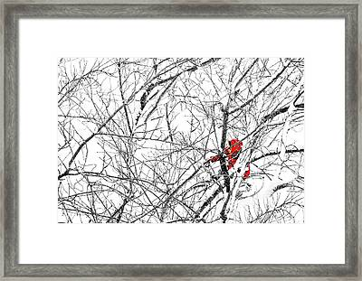 Tangled Framed Print by Diana Angstadt
