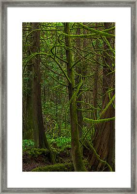 Framed Print featuring the photograph Tangled Forest by Jacqui Boonstra