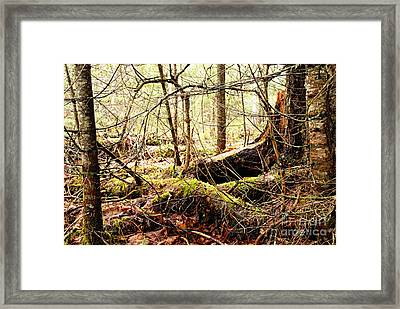 Tangled Forest Framed Print by Larry Ricker