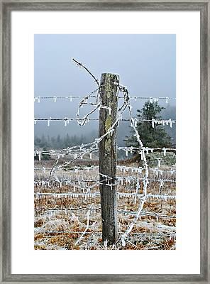 Tangled Framed Print by Kelly Nowak