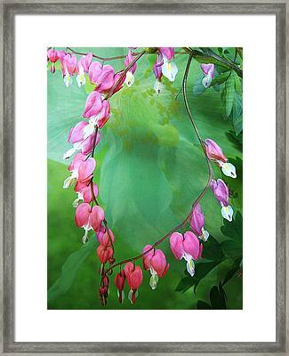 Tangled Love Framed Print by Shirley Sirois