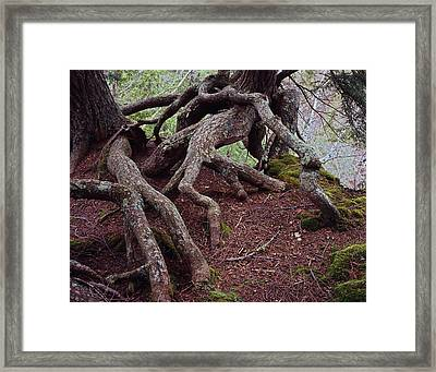Tangled Roots Framed Print