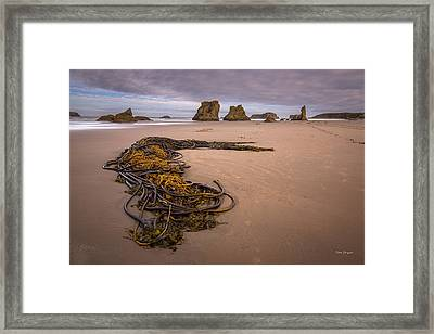 Tangled.... Bandon Oregon Framed Print