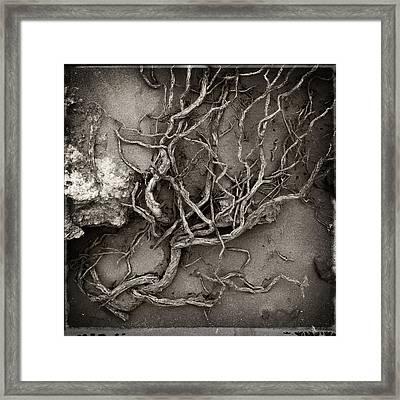 Tangled Framed Print by Tim Nichols
