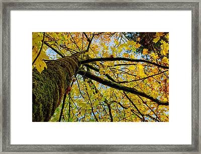 Tangled Up In Yellow Framed Print by Robert Holmberg