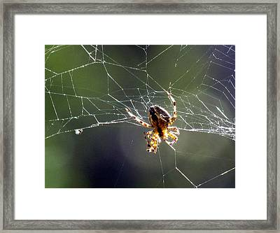 Framed Print featuring the photograph Tangled Web by Bonnie Muir