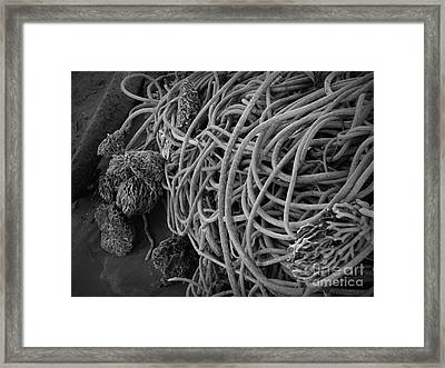 Tangles Of Seaweed 2 Bw Framed Print by Chalet Roome-Rigdon