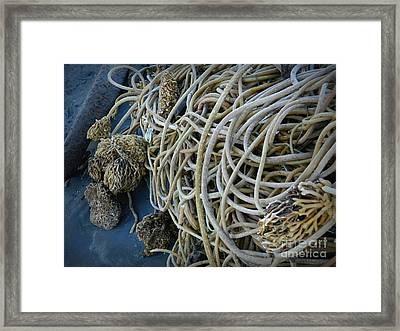Tangles Of Seaweed 2 Framed Print by Chalet Roome-Rigdon