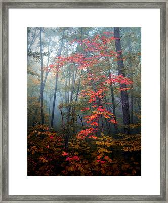 Tanglewood Forest Framed Print by William Schmid