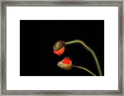 Tango Argentino Framed Print