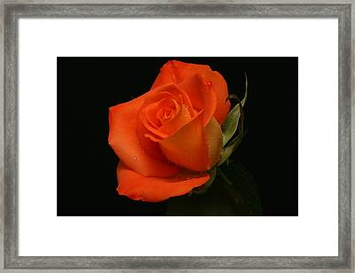 Framed Print featuring the photograph Tangy by Doug Norkum