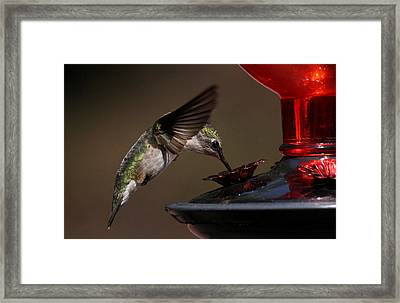 Tanking Up Framed Print by Douglas Stucky