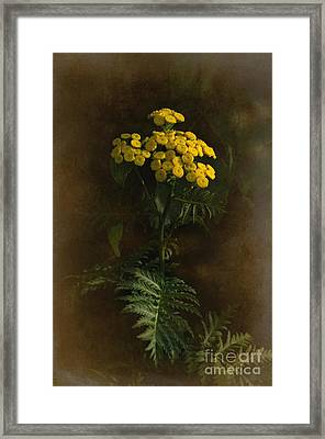 Tansynia Framed Print by The Stone Age