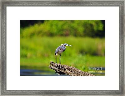 Tantalizing Tricolored Framed Print
